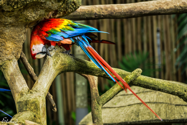 Gorgeous, colorful Macaw