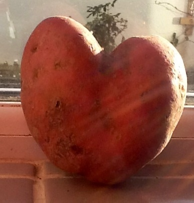A potato for my Valentine