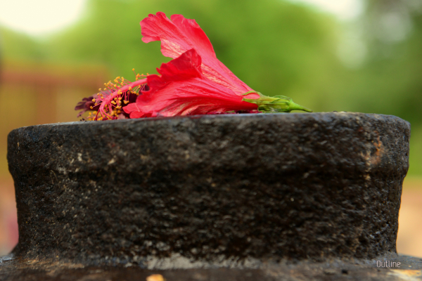 Sacred flower...
