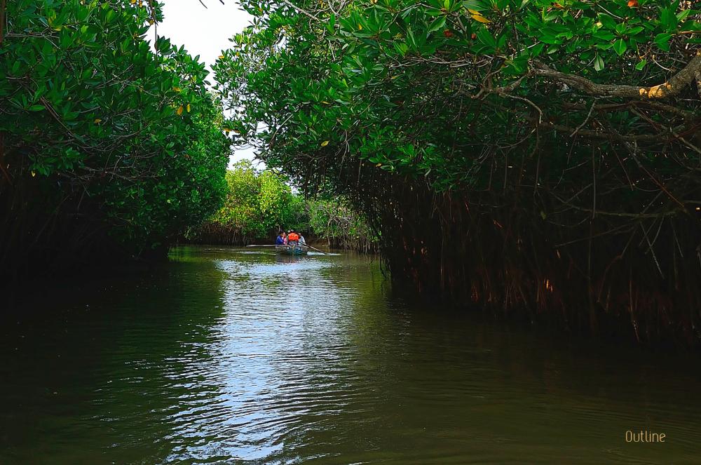 Backwaters of Pichavaram