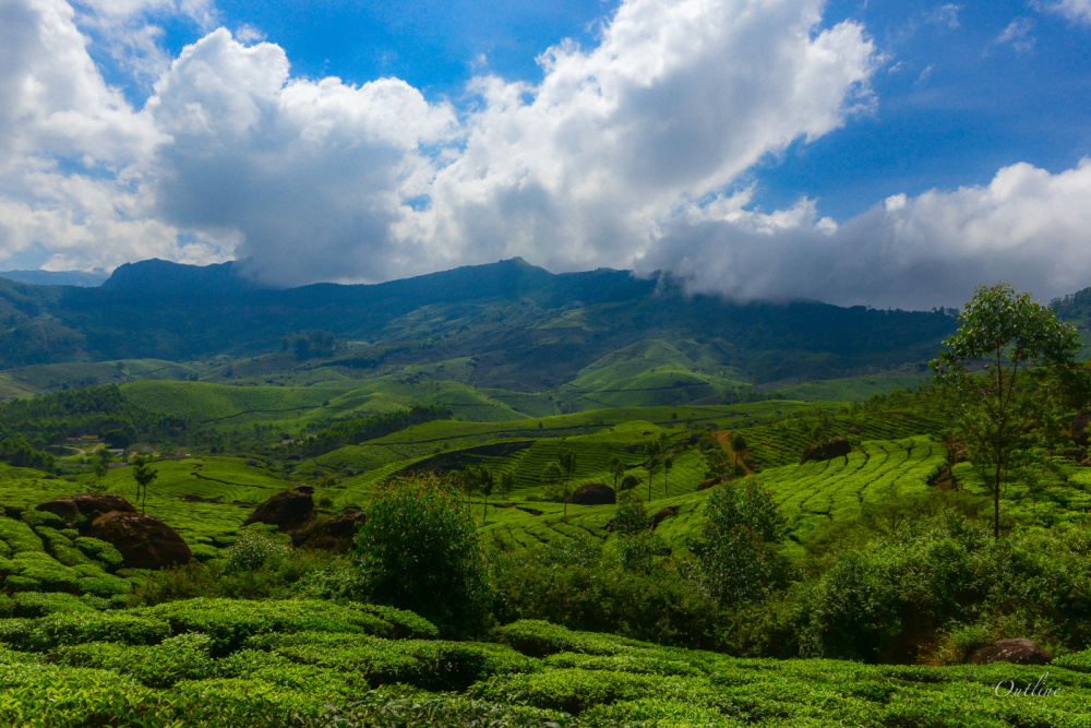 Estates of Munnar