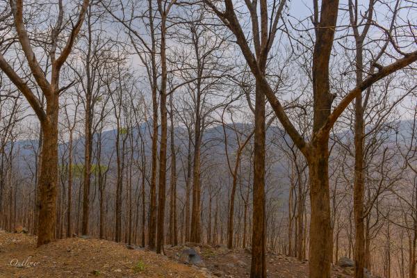 Shevoroy Hills