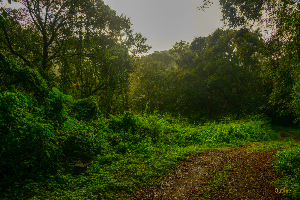 Forests of Gavi