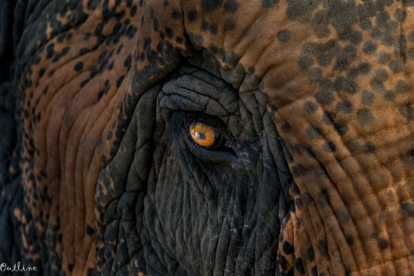 Giant Eye