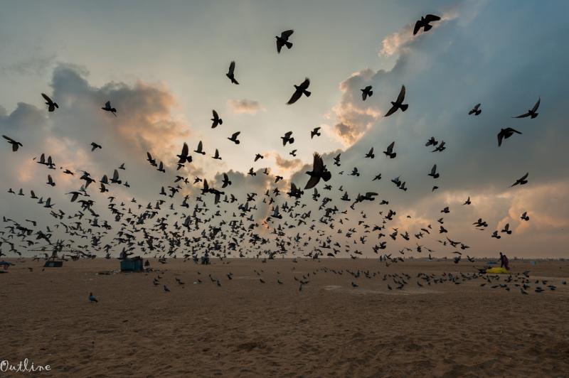 Marina Pigeons