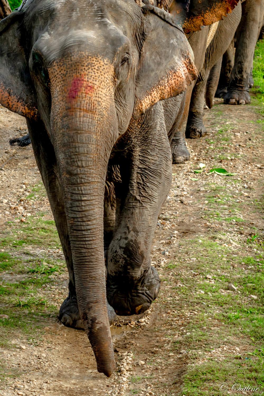 Giants of Kaziranga