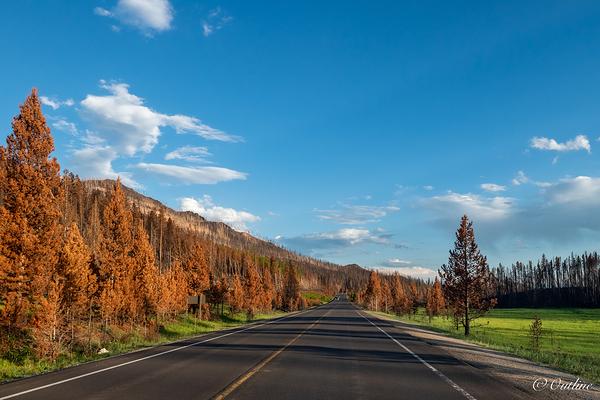 Colors of Rockies
