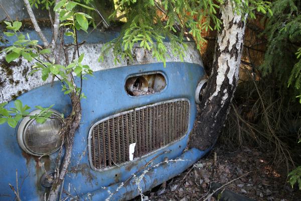 Car Graveyard VI