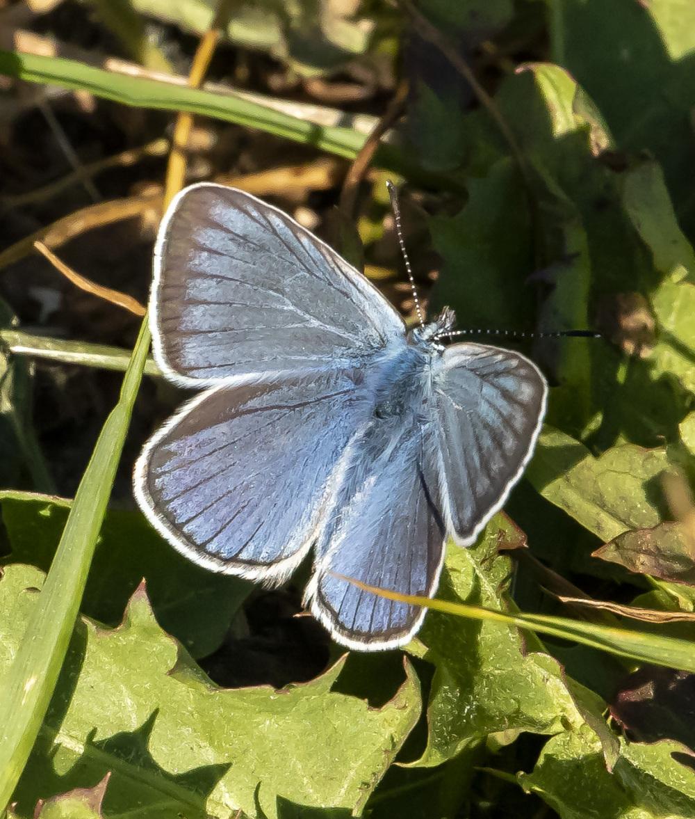Butterfly XV