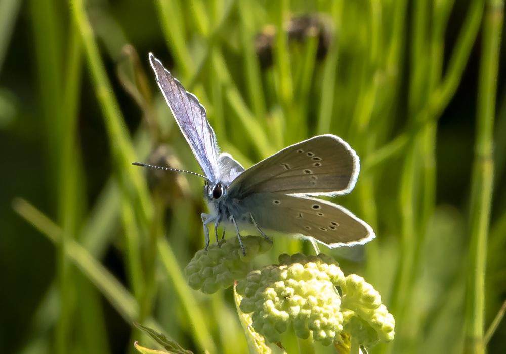 Butterfly XVI