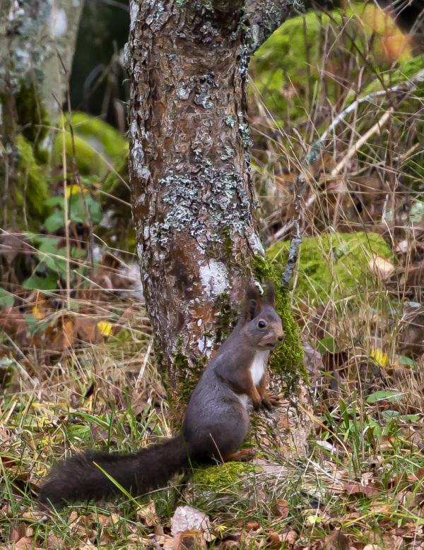 Squirrel I