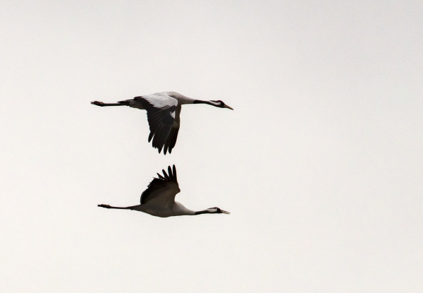 Crane I