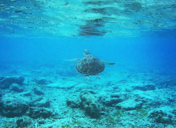Snorkeling #1