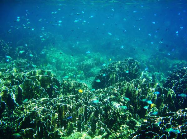 Snorkeling #2