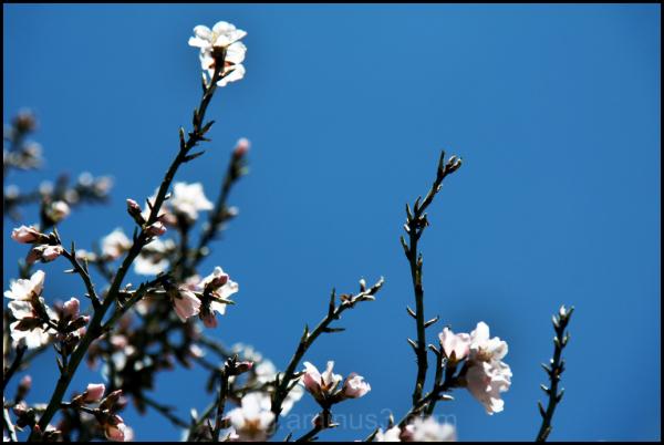 بهار آمد - Spring came