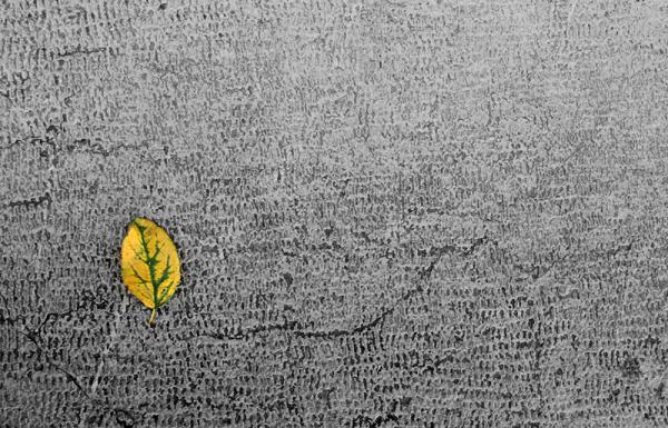 Autumn arrived ...