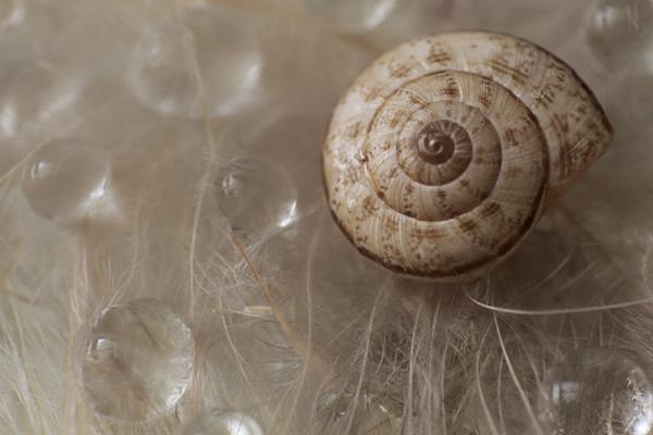 Snail`s Shell-1