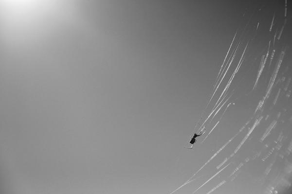 If I Were A Spider...