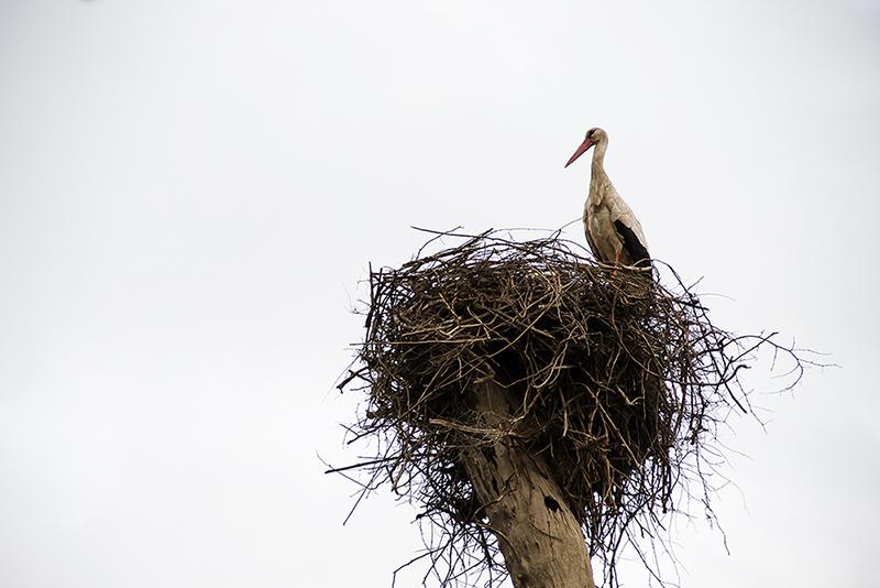 The Storks Garden-1