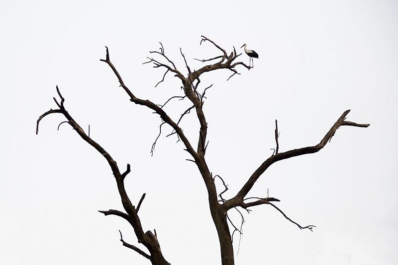 The Storks Garden-2