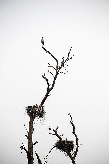 The Storks Garden-4