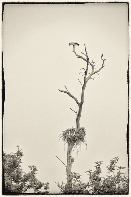 The Storks Garden-7