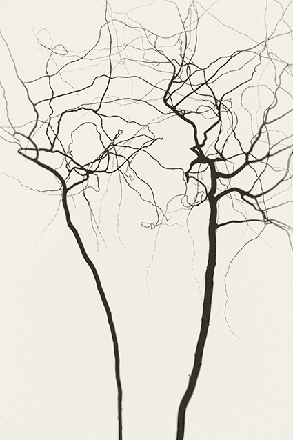 Abstract branches