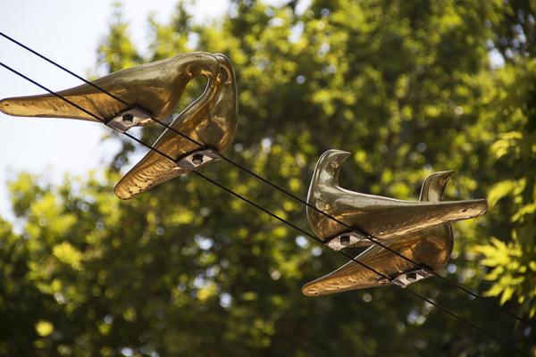 Birds Of City