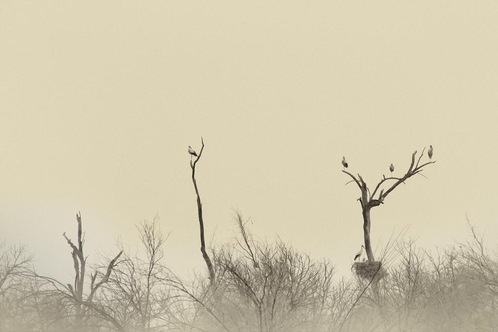 The Storks Garden-9