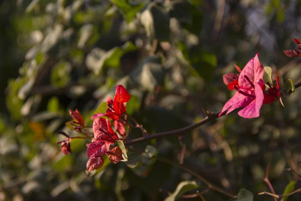 Beautiful Flowers Under the Sunshine