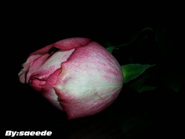 عکاس : سعیده