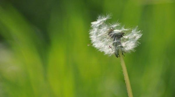 life is sweet   - 2  -