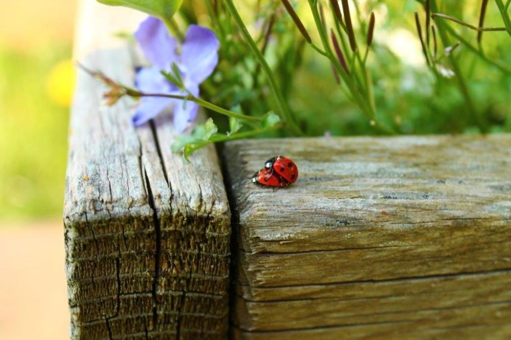 Ladybird....