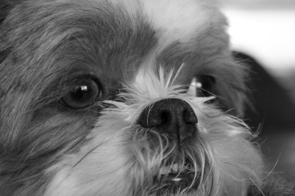 Little dog her name is Loebas