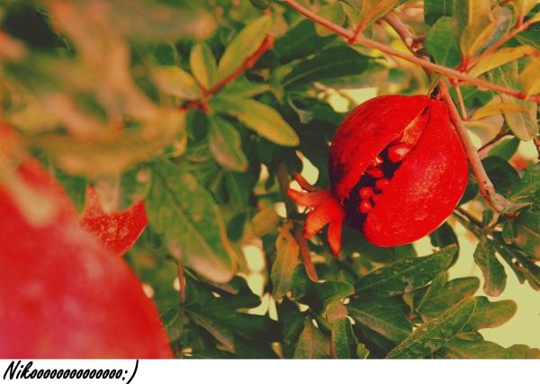 انار گلگون می خندید؟