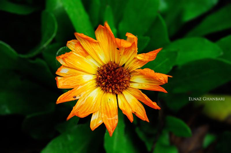 orang flower...