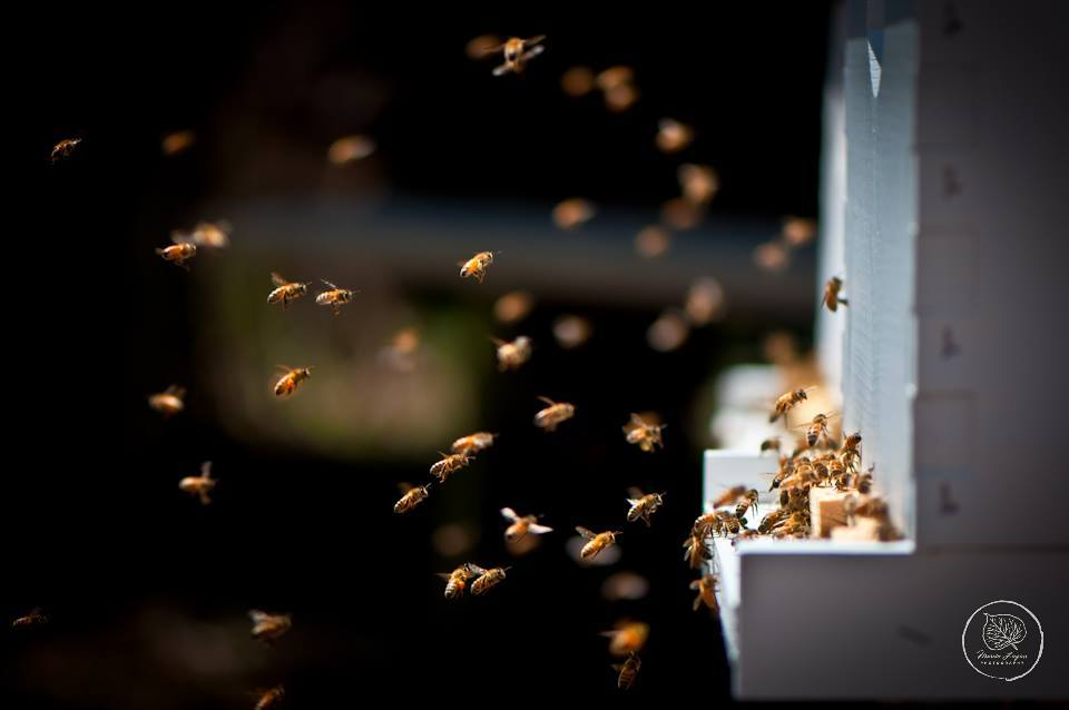 The Flight of the Honeybee
