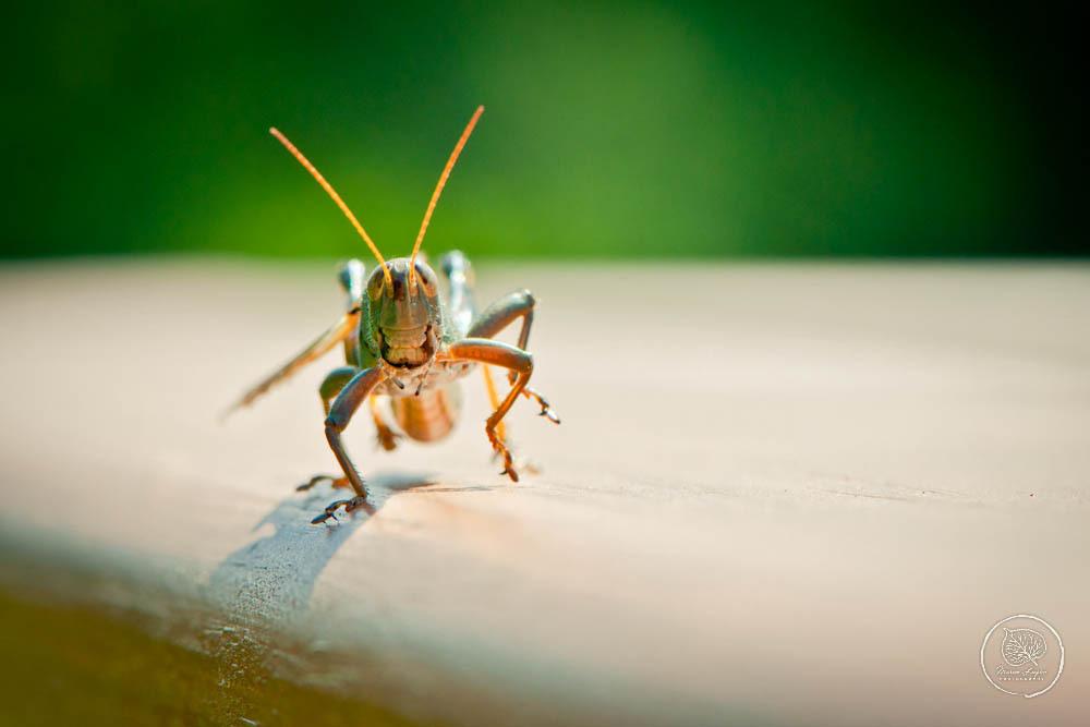 A Grasshopper Smiled at Me