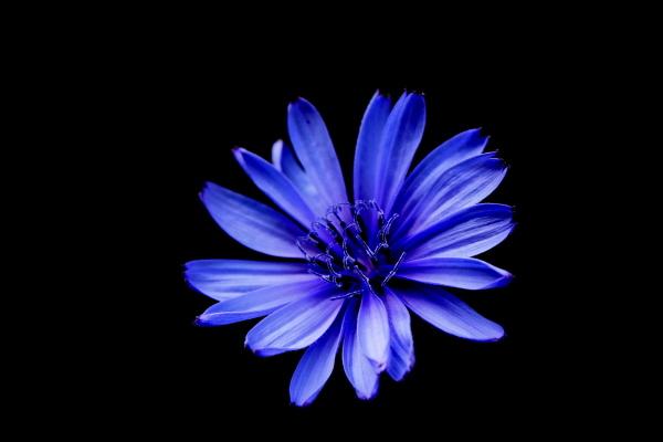 blue [azul]