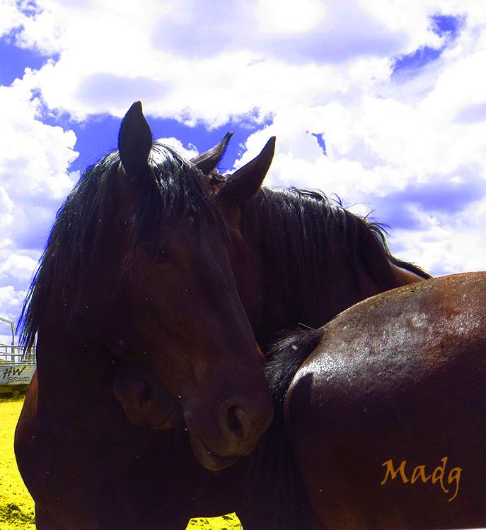 Cavall I