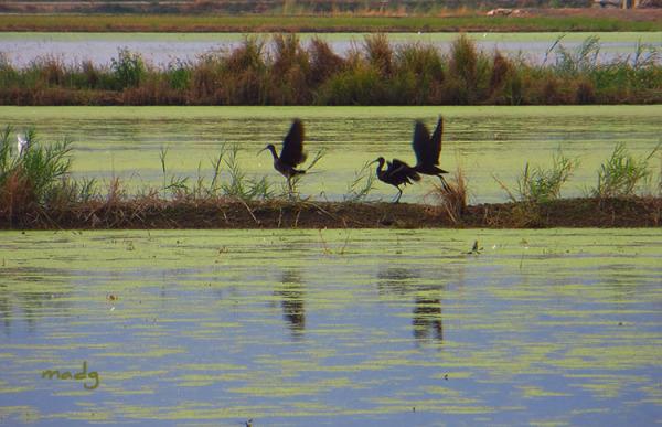 Tarda de tardor al delta de l'Ebre