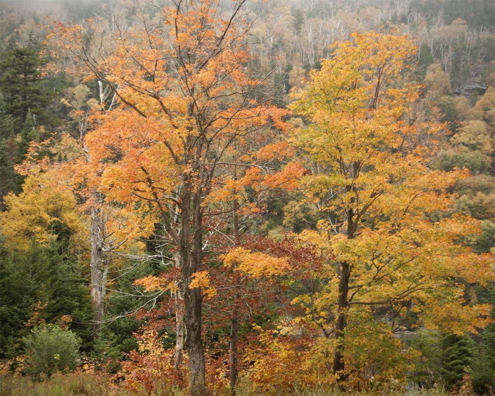 Fall foliate in Vermont
