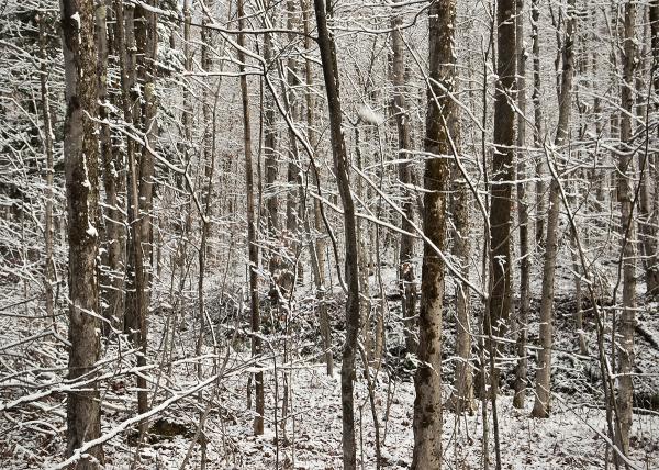 First snow in Vermont