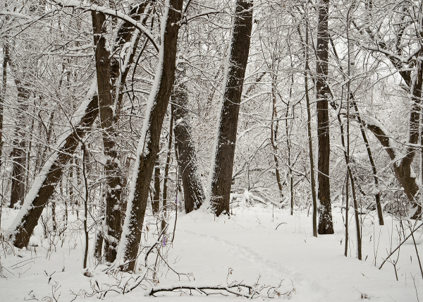 In the snowy woods of Vermont