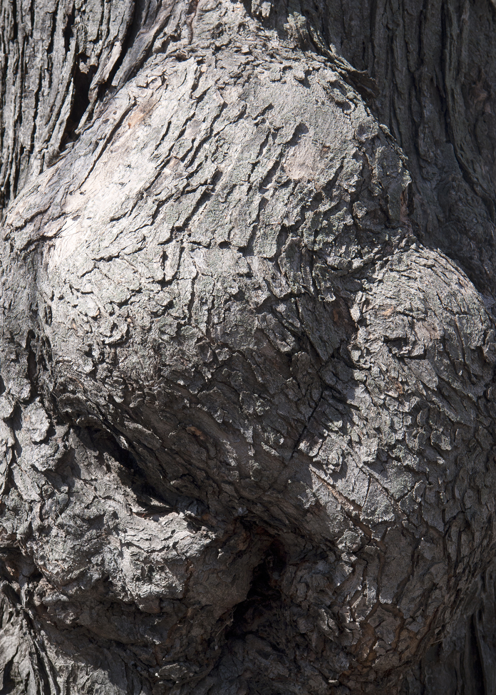 Scarred Tree Trunk