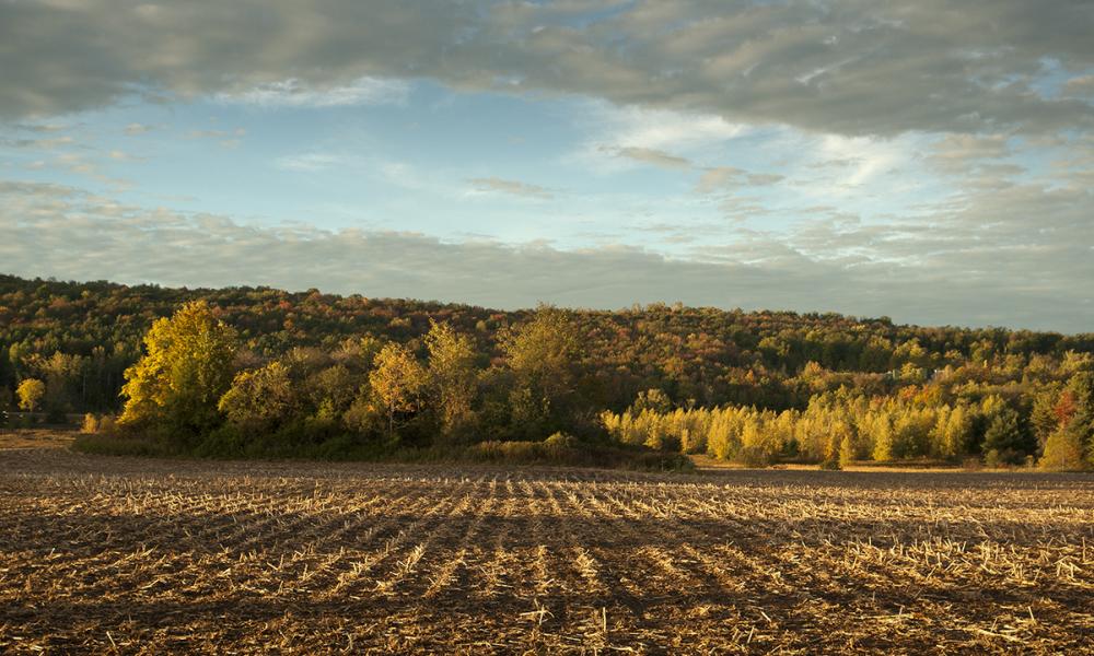 Williston Farm at Sunrise