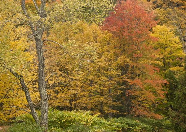 Vermont Fall Autumn Foliage
