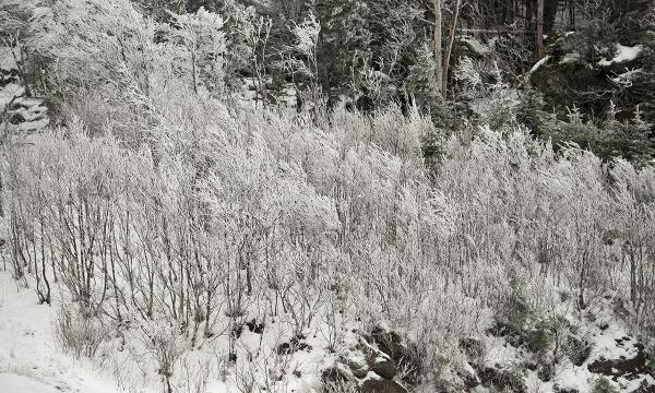 Snow in Buels Gore, Vermont