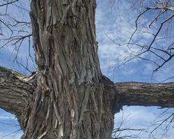 Eccentric Tree Trunk