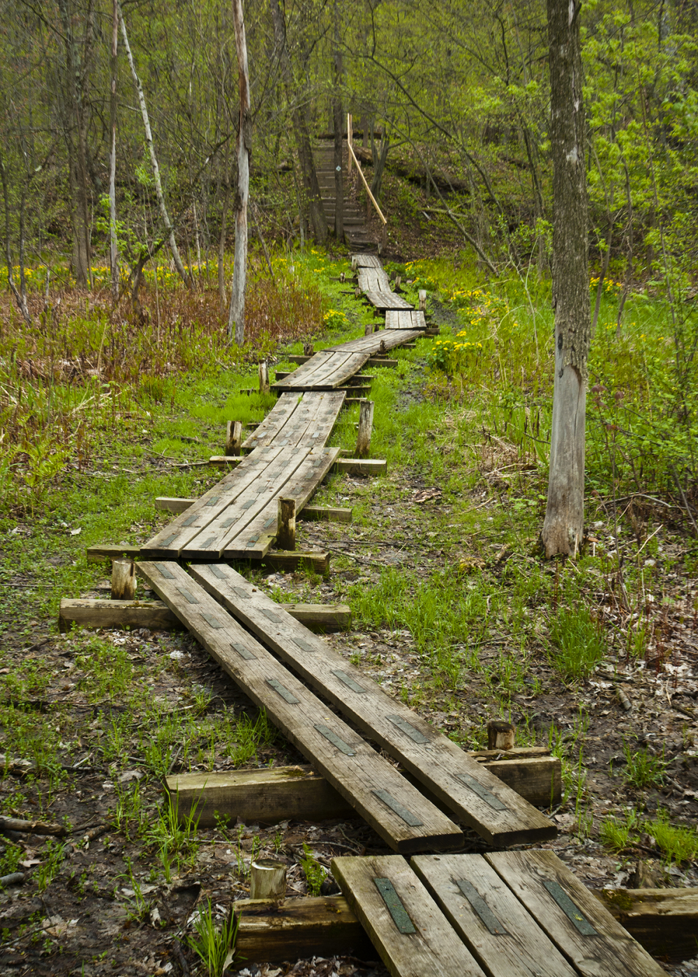 Path Throught the Woods